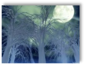 Moonlight Forest